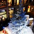 Photos: ~Merry Christmas!~