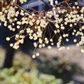 写真: ~ミルキーの樹~
