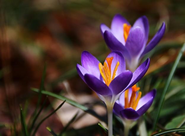 Photos: ~春を告げるもの~