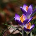 写真: ~春を告げるもの~