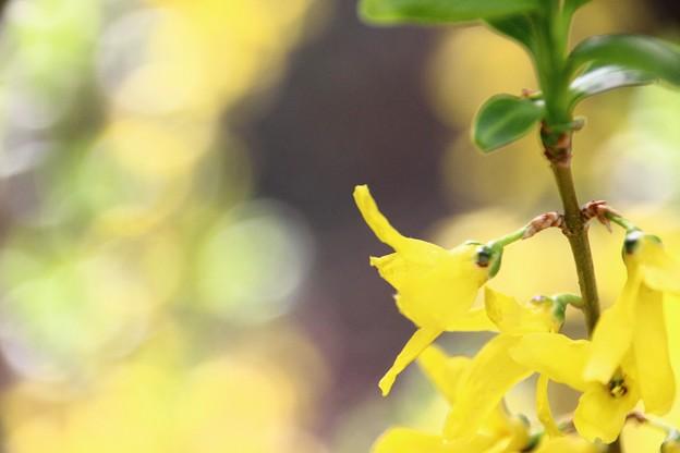 写真: ~春の横顔に~