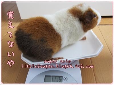 まろんの体重4