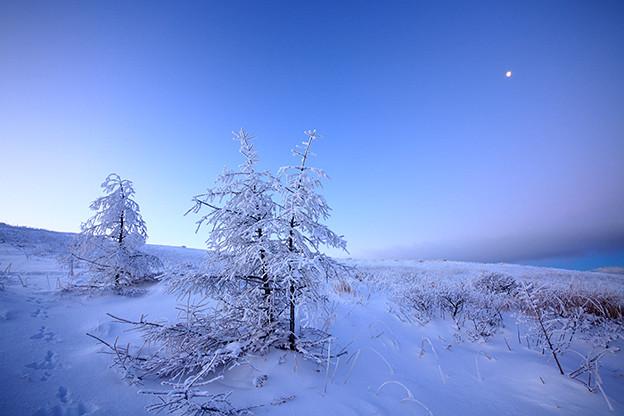 残月と霧氷の高原