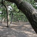 Photos: 三保の松原1