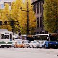Photos: よーいドン!信号待ちをする市電やバス。