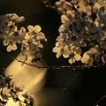 夕暮れ~春風が吹いた。