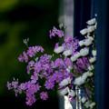 隣に咲く花