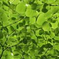 見上げればGreen green