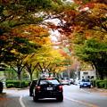 Photos: 街は色づくのに~♪