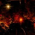 Photos: 一夜の紅