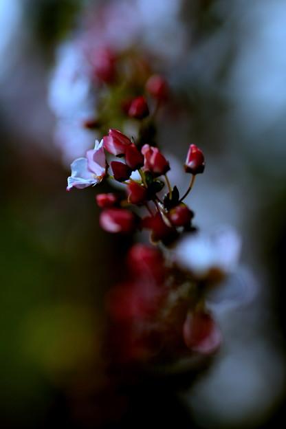 蕾はまるで薔薇のよう~!