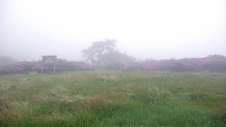 万年山~吉武台牧場から歩く(6)最初のミヤマキリシマ群生地