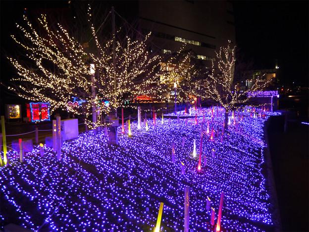 写真: 小倉・紫川のクリスマスイルミ2013(2)