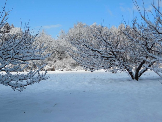 1月9日雪が降った30