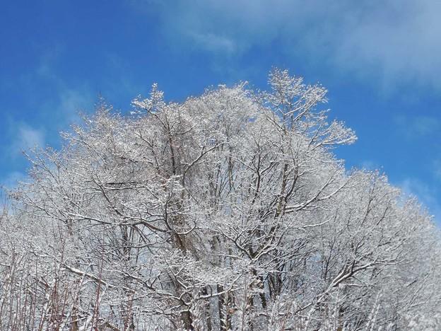 1月9日雪が降った31