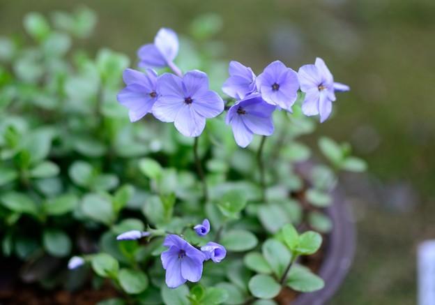 小さい花 2
