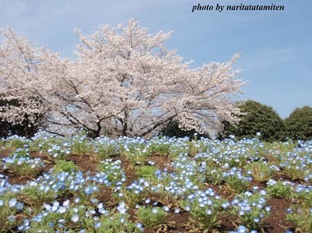 大宮花の丘公苑05