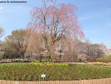大宮花の丘公苑10