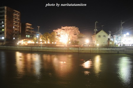 高橋屋さんの夜桜1