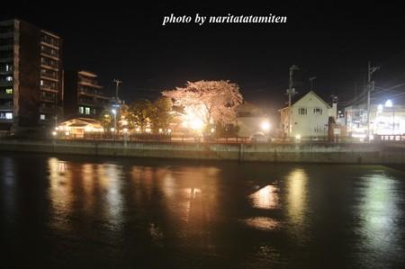 高橋屋さんの夜桜2
