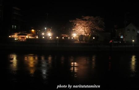 高橋屋さんの夜桜6