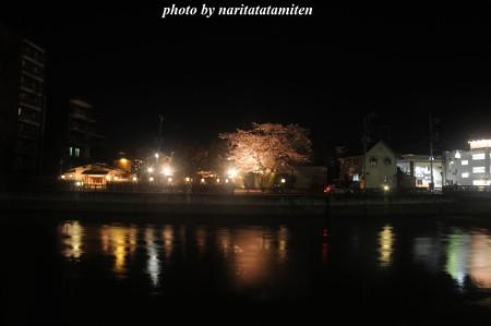 高橋屋さんの夜桜7