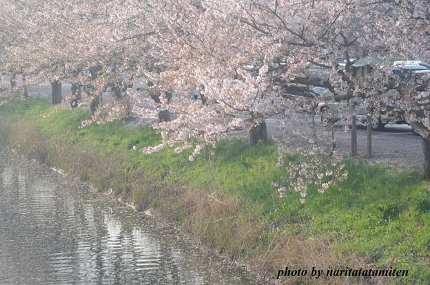 桜市が中止7