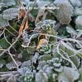 写真: 寒い02