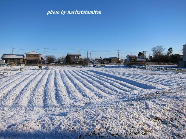 写真: 雪景色01