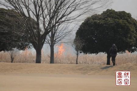 渡良瀬のヨシ焼き05