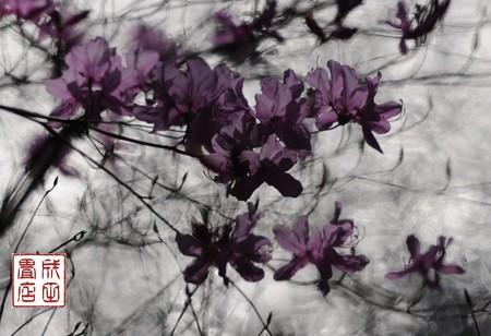 みかも山公園の花03