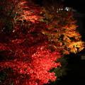 Photos: IMG_9454大山登山と紅葉