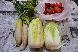 130308-1 大根・白菜・トマト