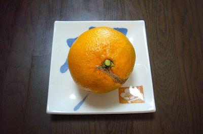 Photos: 140116-1 温州みかん