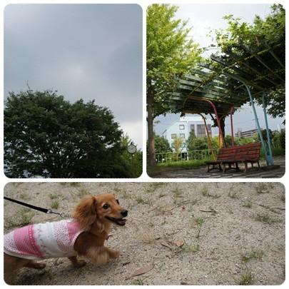 20120811 お散歩1