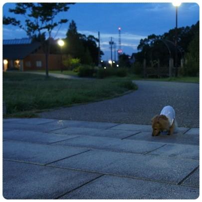 20120828 お散歩2
