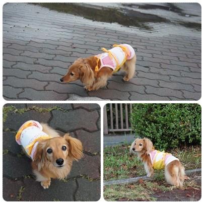 20120915 雨上がりのお散歩