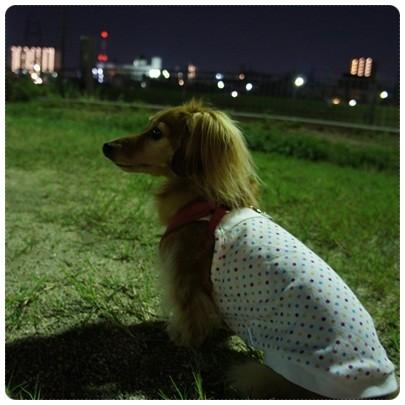 20120914 お散歩