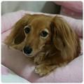 写真: 20120905 JURI