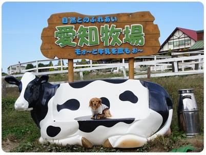写真: 20121025 愛知牧場
