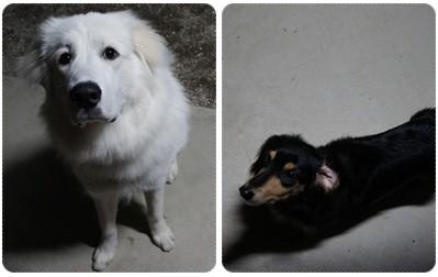 20121103 シンバ&MARO