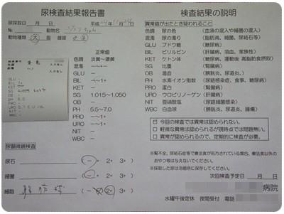 20121124 おちっこ検査