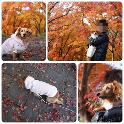 20121124 紅葉狩り2
