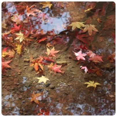 20121124 紅葉狩り7