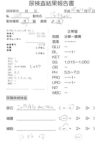 20121228 おちっこ検査 結果