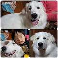 Photos: 20130102 シンバ&☆くん(甥っ子)