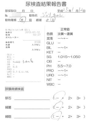 20130112 おちっこ検査