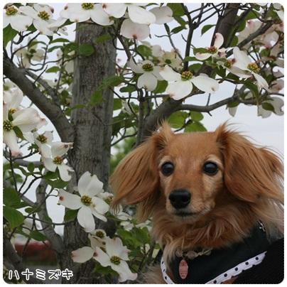 写真: 20130420 お散歩
