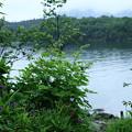 Photos: 志賀高原 琵琶池(2)