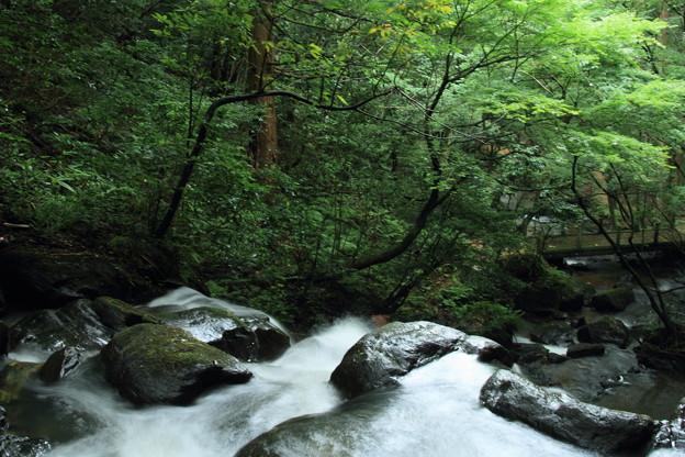七つ滝と緑  能美市辰口